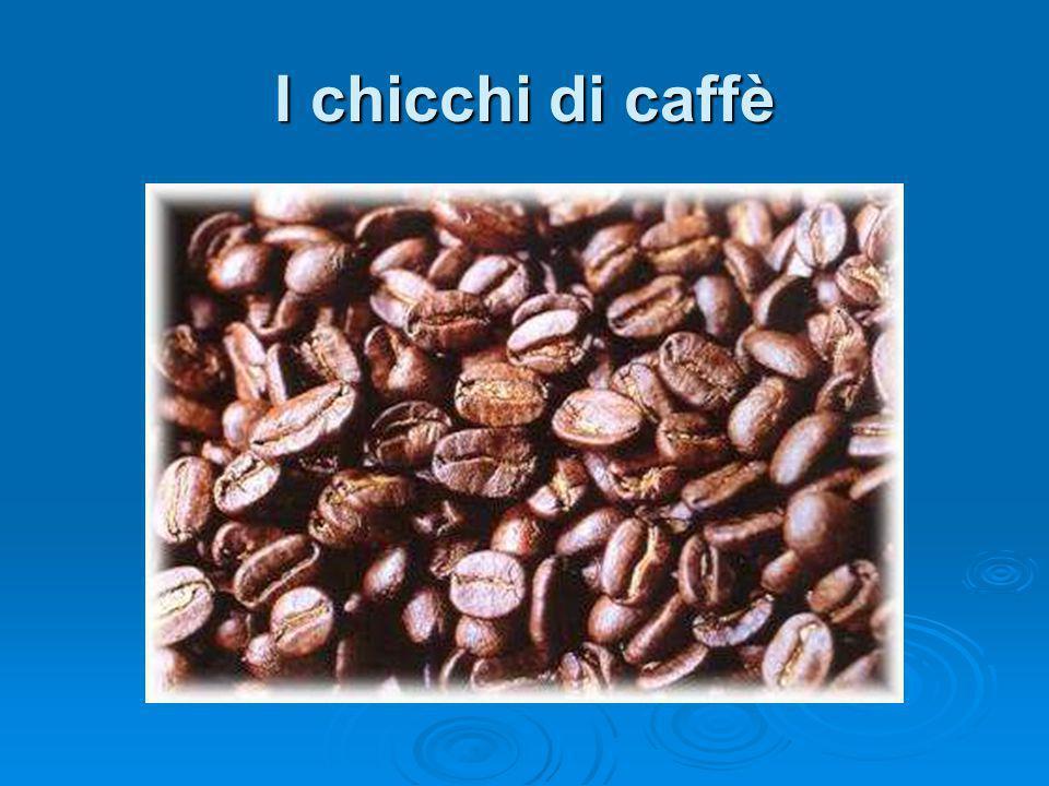I chicchi di caffè