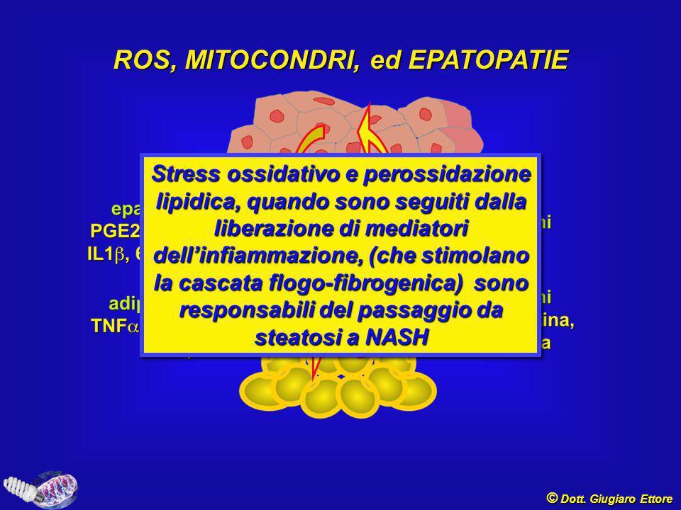 ROS, MITOCONDRI, ed EPATOPATIE