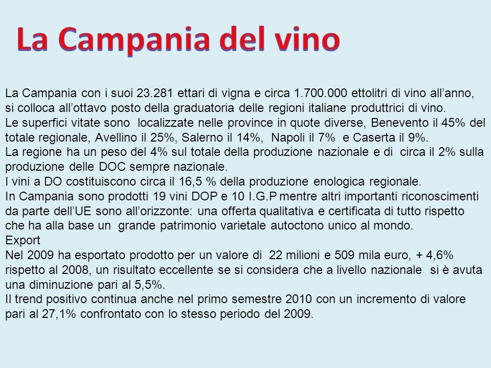 La Campania del vino