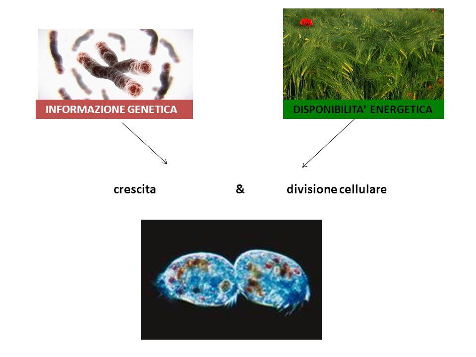 crescita & divisione cellulare