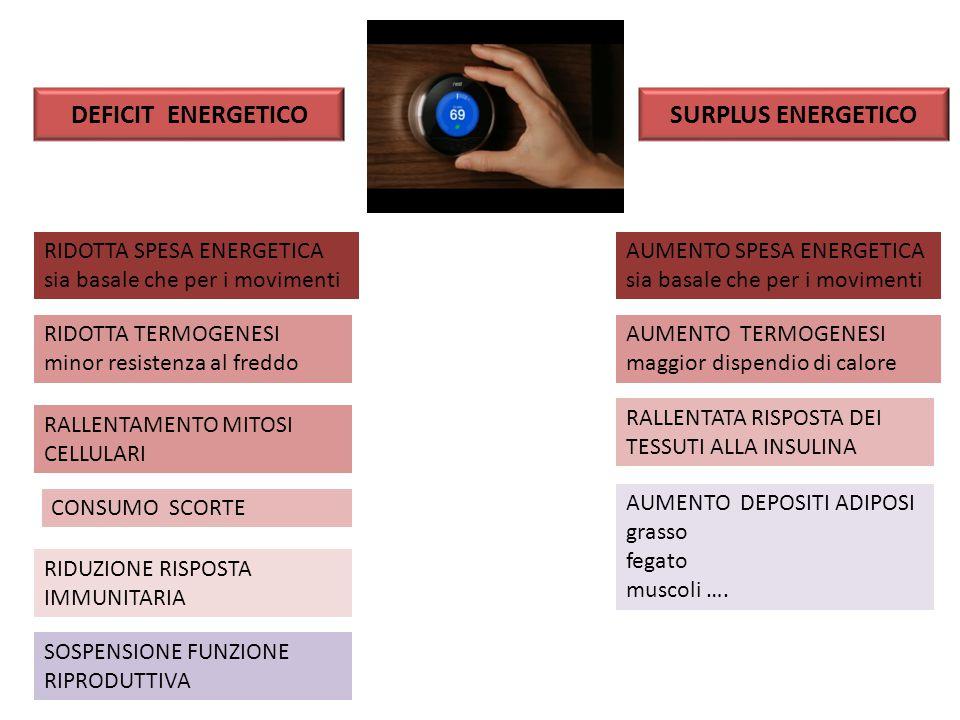 DEFICIT ENERGETICO SURPLUS ENERGETICO