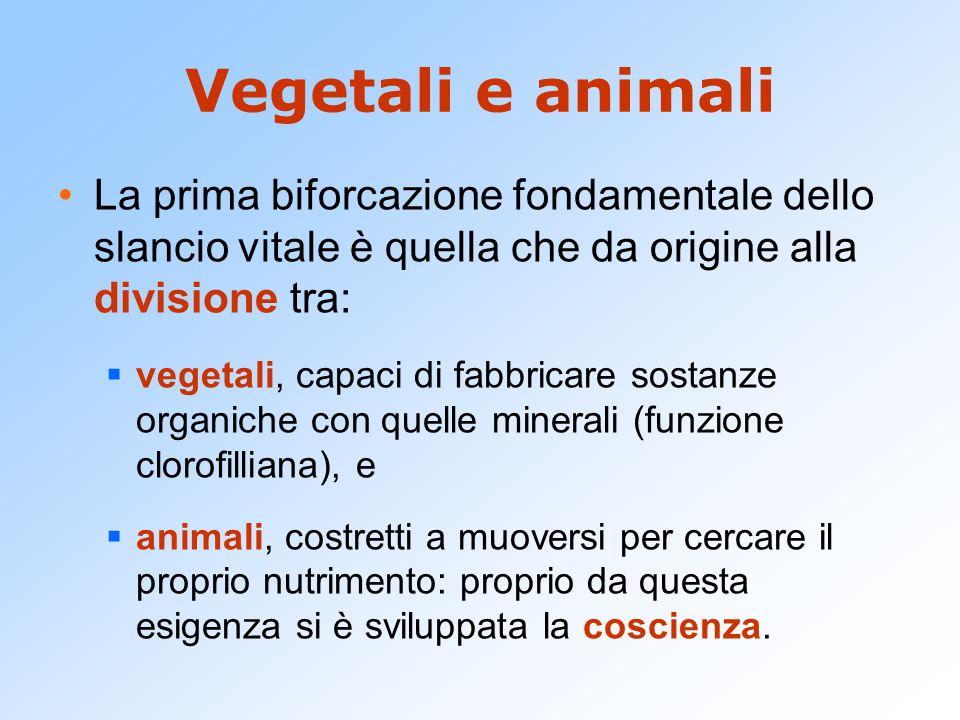 Vegetali e animali La prima biforcazione fondamentale dello slancio vitale è quella che da origine alla divisione tra: