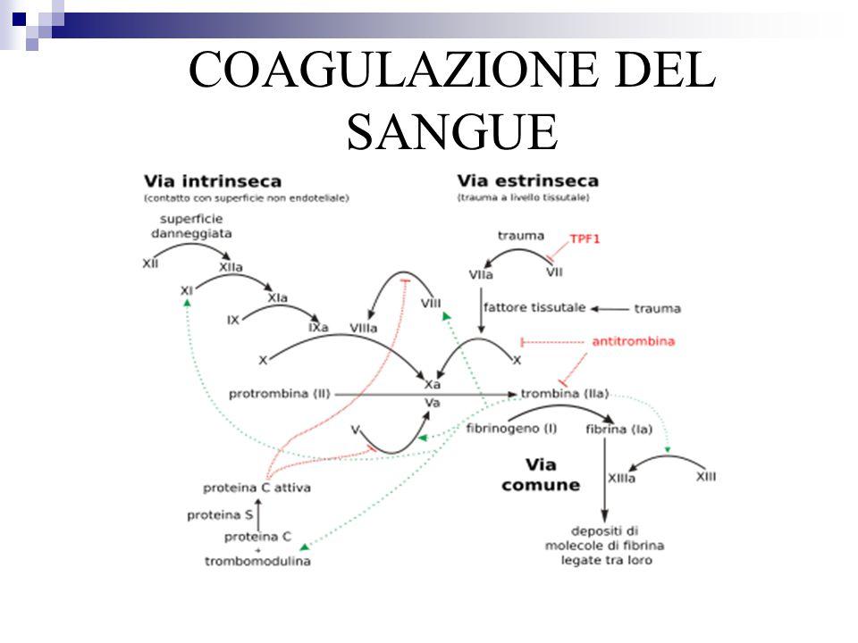 COAGULAZIONE DEL SANGUE