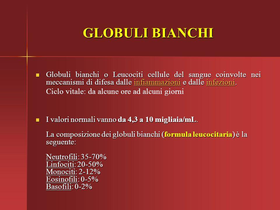GLOBULI BIANCHI Globuli bianchi o Leucociti cellule del sangue coinvolte nei meccanismi di difesa dalle infiammazioni e dalle infezioni.