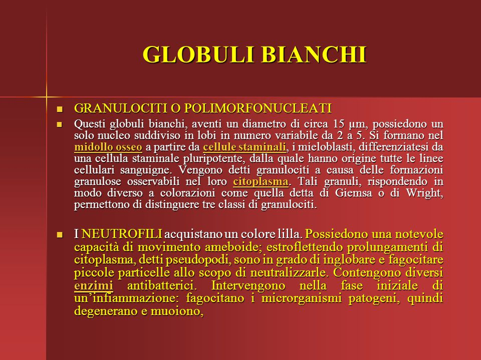 GLOBULI BIANCHI GRANULOCITI O POLIMORFONUCLEATI