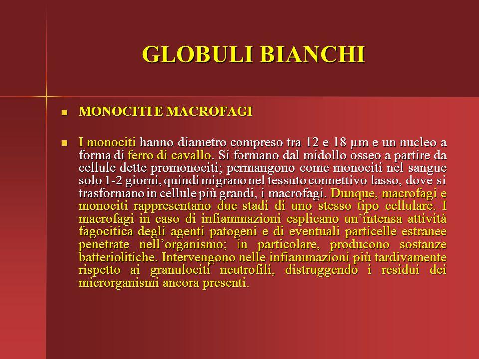 GLOBULI BIANCHI MONOCITI E MACROFAGI