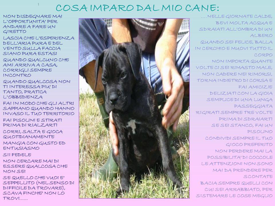 COSA IMPARO DAL MIO CANE: