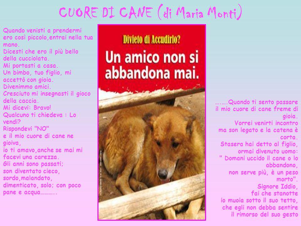 CUORE DI CANE (di Maria Monti)