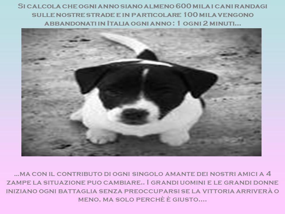 Si calcola che ogni anno siano almeno 600 mila i cani randagi sulle nostre strade e in particolare 100 mila vengono abbandonati in Italia ogni anno : 1 ogni 2 minuti…