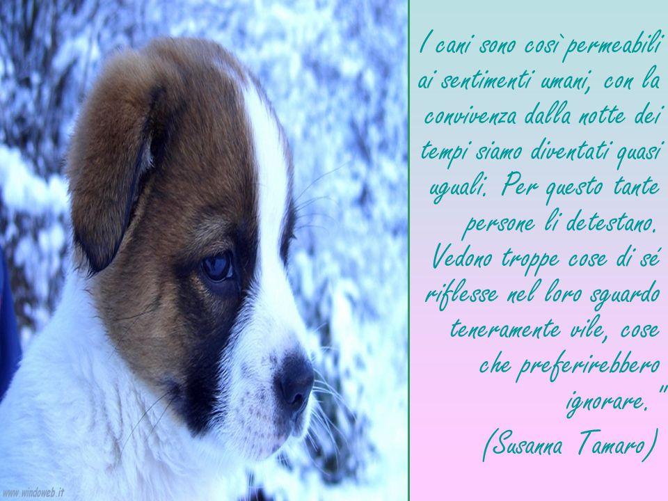 I cani sono così permeabili ai sentimenti umani, con la convivenza dalla notte dei tempi siamo diventati quasi uguali. Per questo tante persone li detestano. Vedono troppe cose di sé riflesse nel loro sguardo teneramente vile, cose che preferirebbero ignorare.