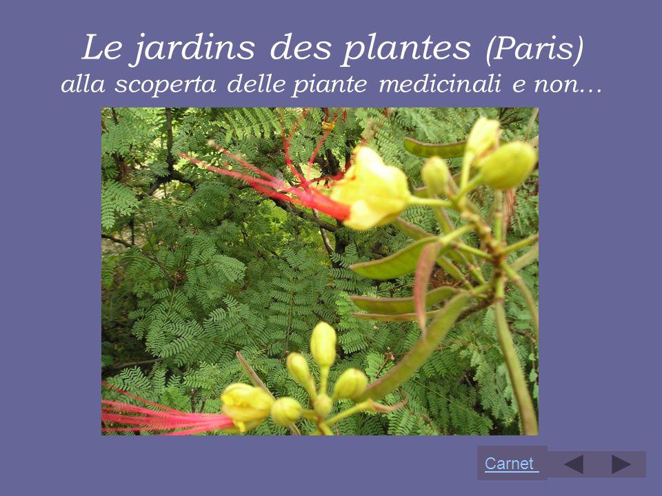 Le jardins des plantes (Paris) alla scoperta delle piante medicinali e non…