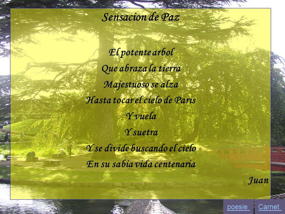 Sensacion de Paz El potente arbol Que abraza la tierra