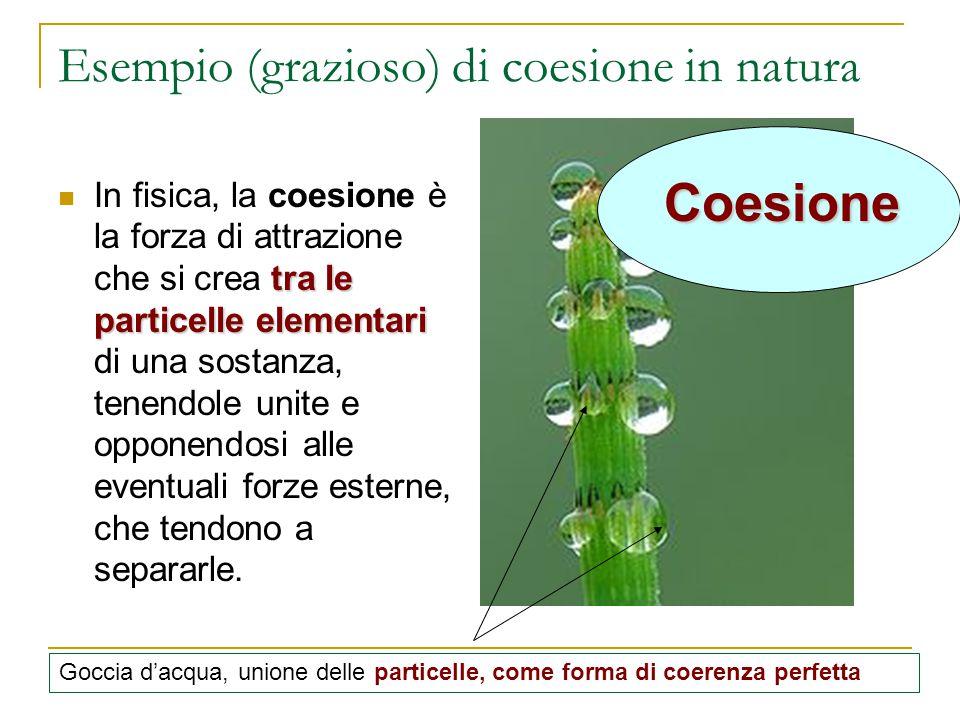 Esempio (grazioso) di coesione in natura