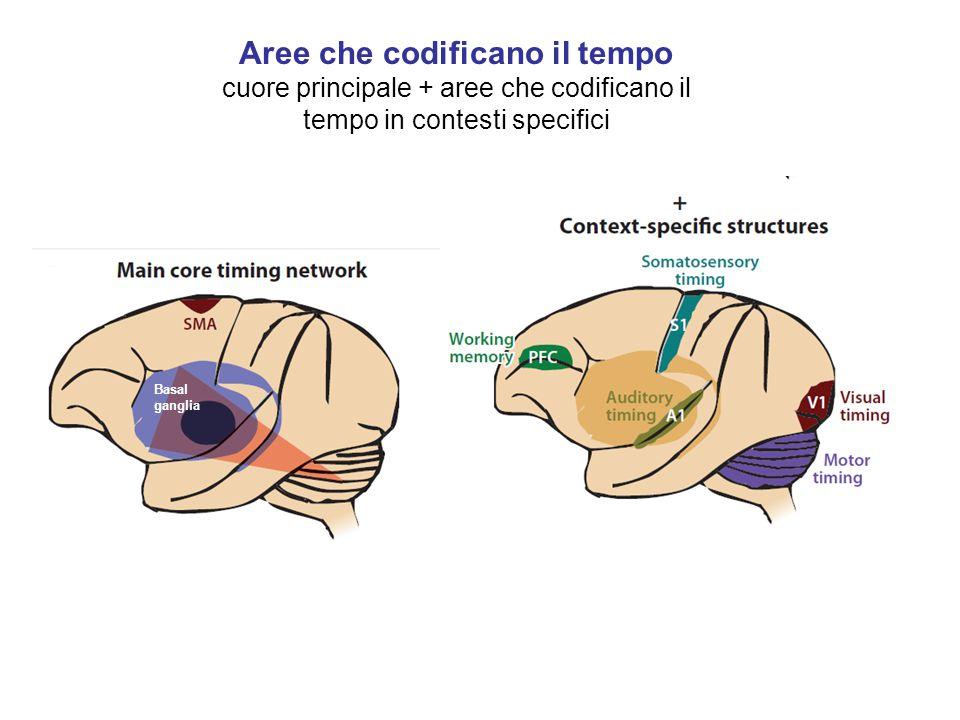 Aree che codificano il tempo cuore principale + aree che codificano il tempo in contesti specifici