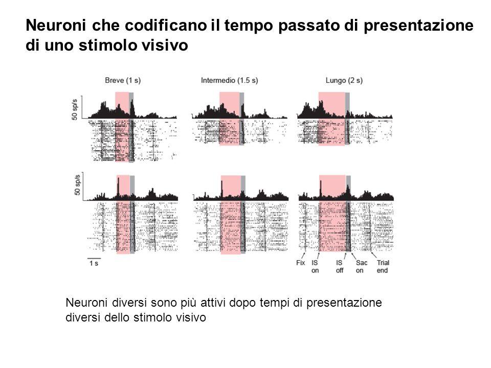Neuroni che codificano il tempo passato di presentazione