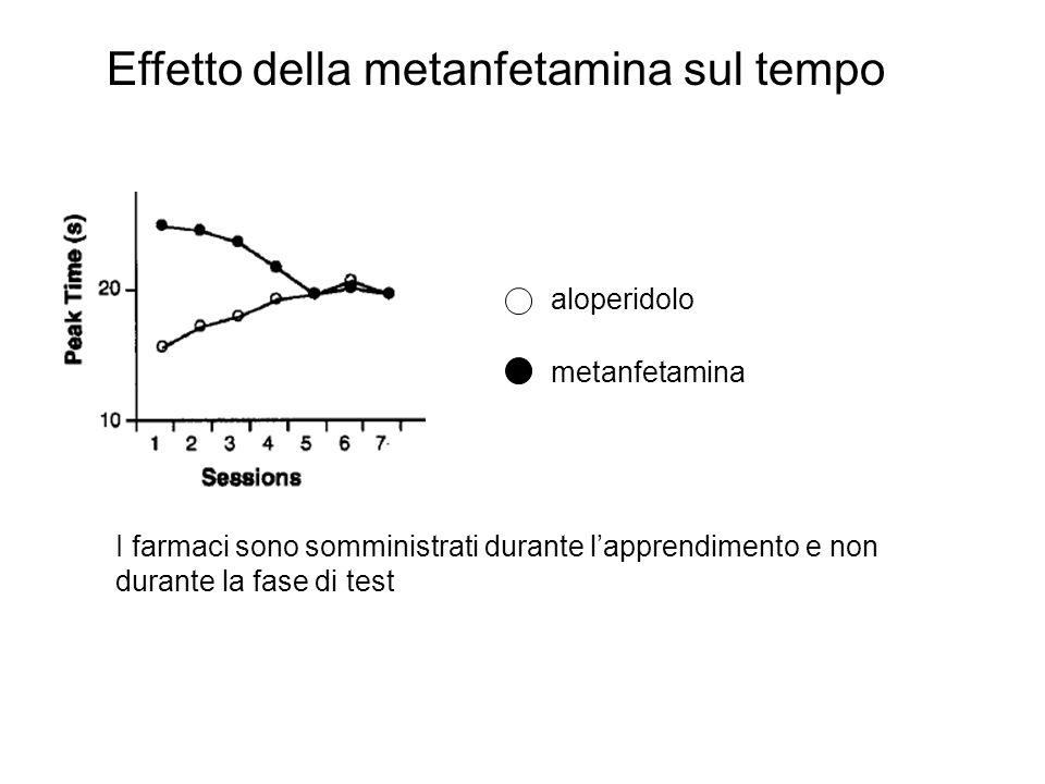 Effetto della metanfetamina sul tempo