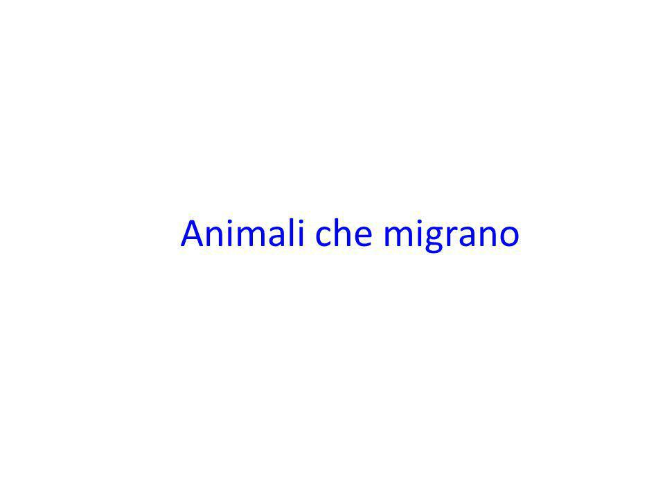 Animali che migrano On the move