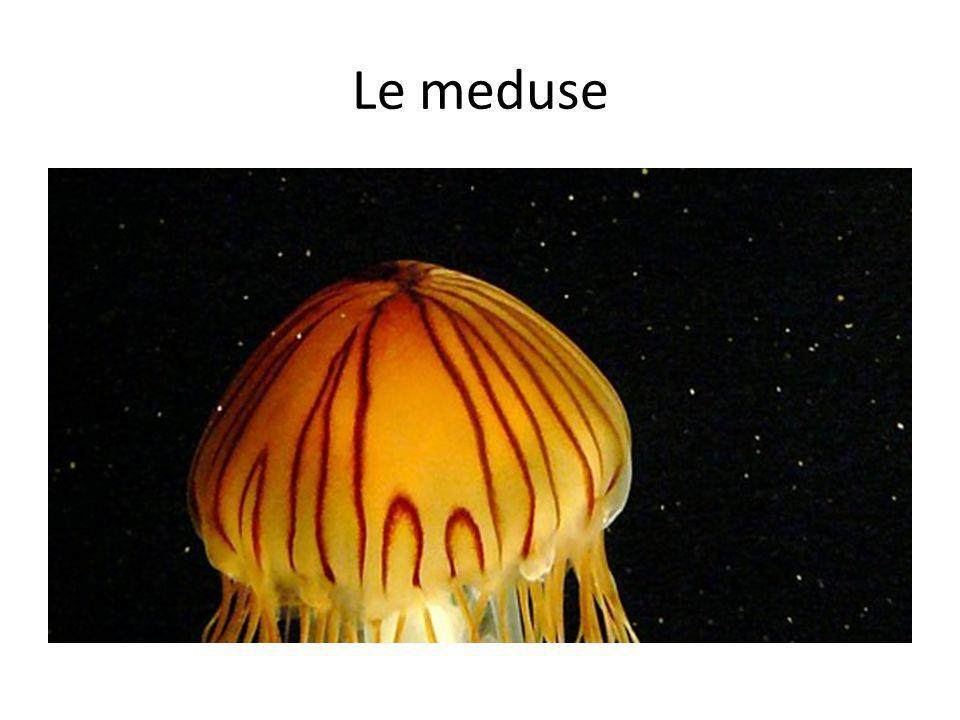 Le meduse Zooplankton.