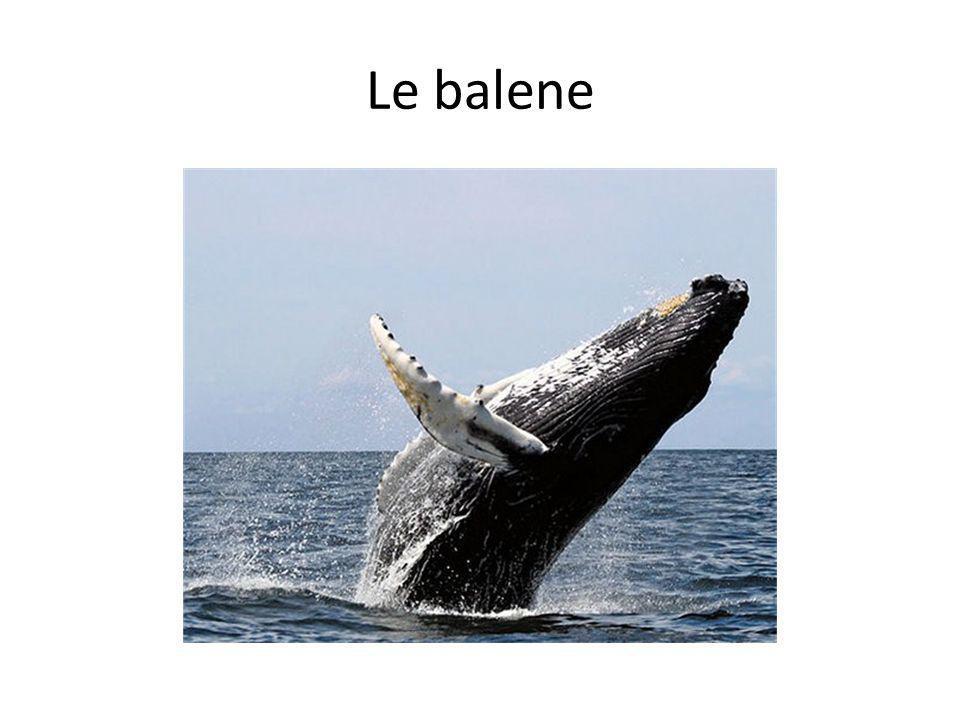 Le balene Baleen whales