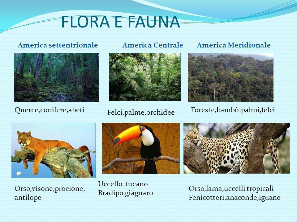 FLORA E FAUNA America settentrionale America Centrale America Meridionale. Querce,conifere,abeti.