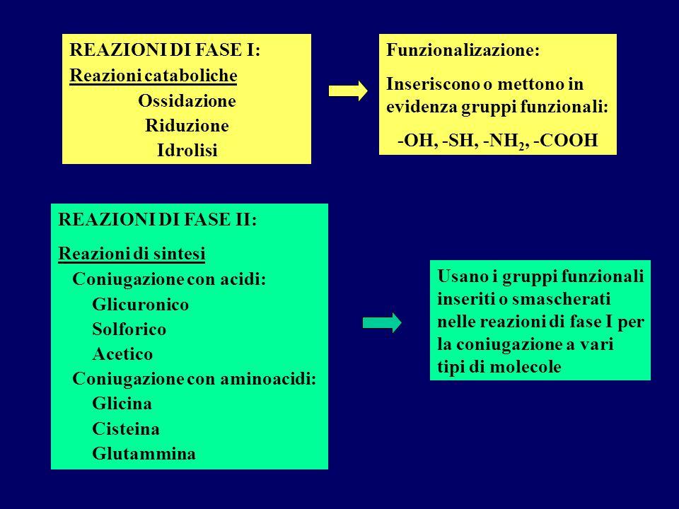 REAZIONI DI FASE I: Reazioni cataboliche. Ossidazione. Riduzione. Idrolisi. Funzionalizazione: