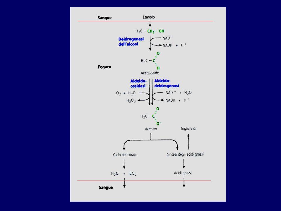 L'etanolo, oltre che dal CYP2E1, viene metabolizzato da un enzima citoplasmatico solubile: l'alcol deidrogenasi.