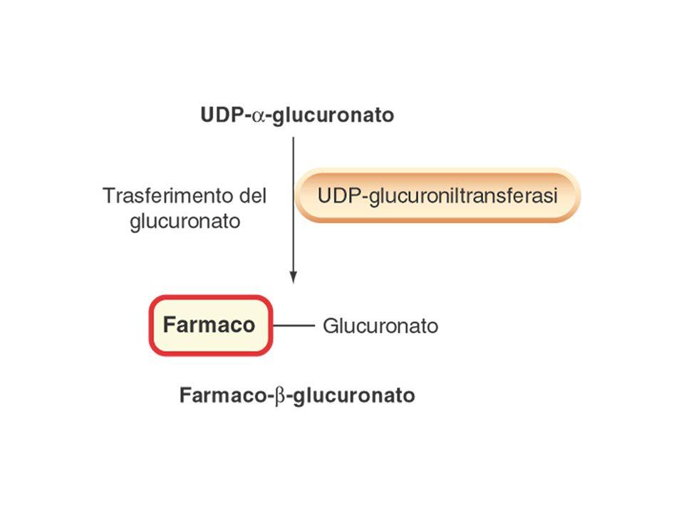 Acido glucuronico uridin di fosfato (UDP-GA): composto contenente fosfato ad alta energia dal quale il glucuronato viene trasferito su un gruppo ricco di elettroni (N, O oppure S) del substrato, formando un legame amidico, estereo o tiolico.