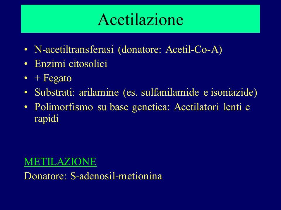 Acetilazione N-acetiltransferasi (donatore: Acetil-Co-A)
