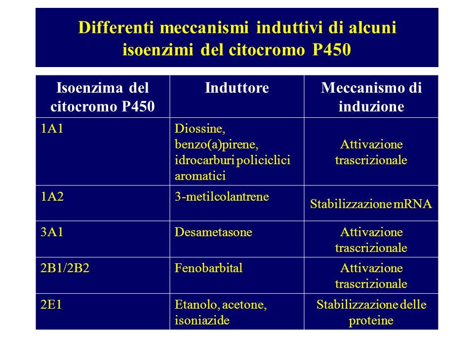 Differenti meccanismi induttivi di alcuni isoenzimi del citocromo P450
