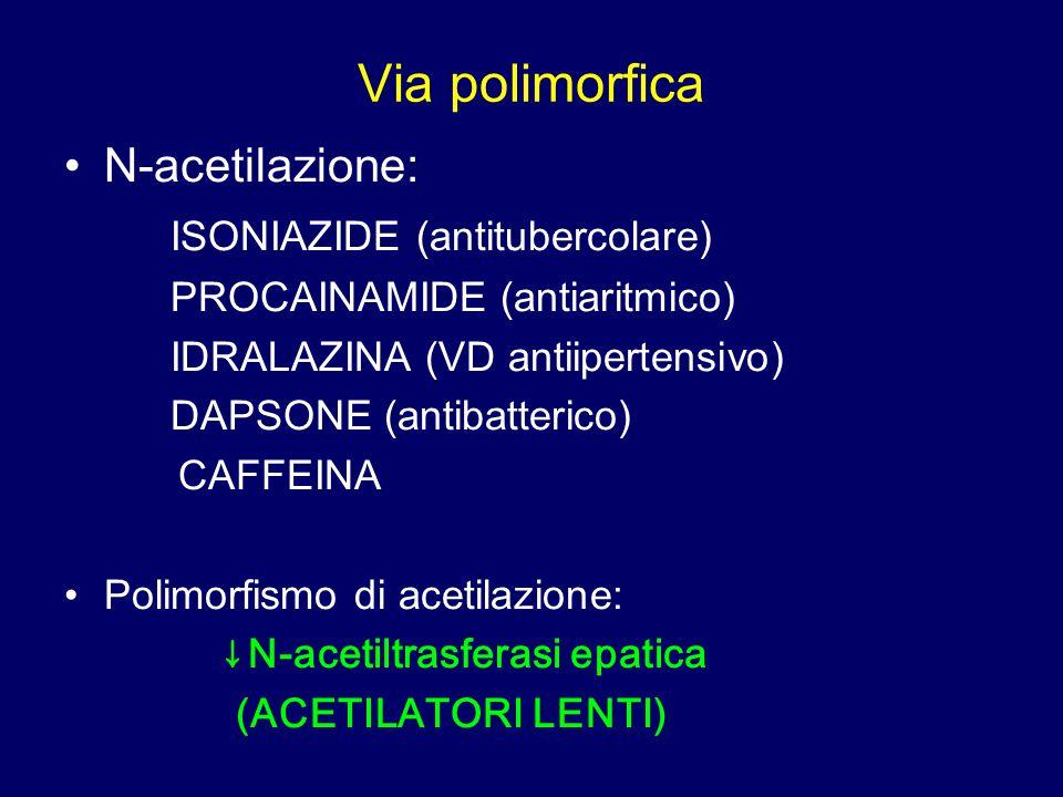 Via polimorfica N-acetilazione: ISONIAZIDE (antitubercolare)