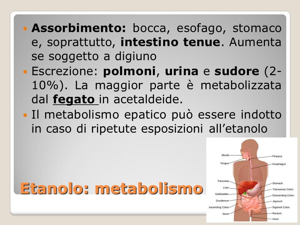 Assorbimento: bocca, esofago, stomaco e, soprattutto, intestino tenue