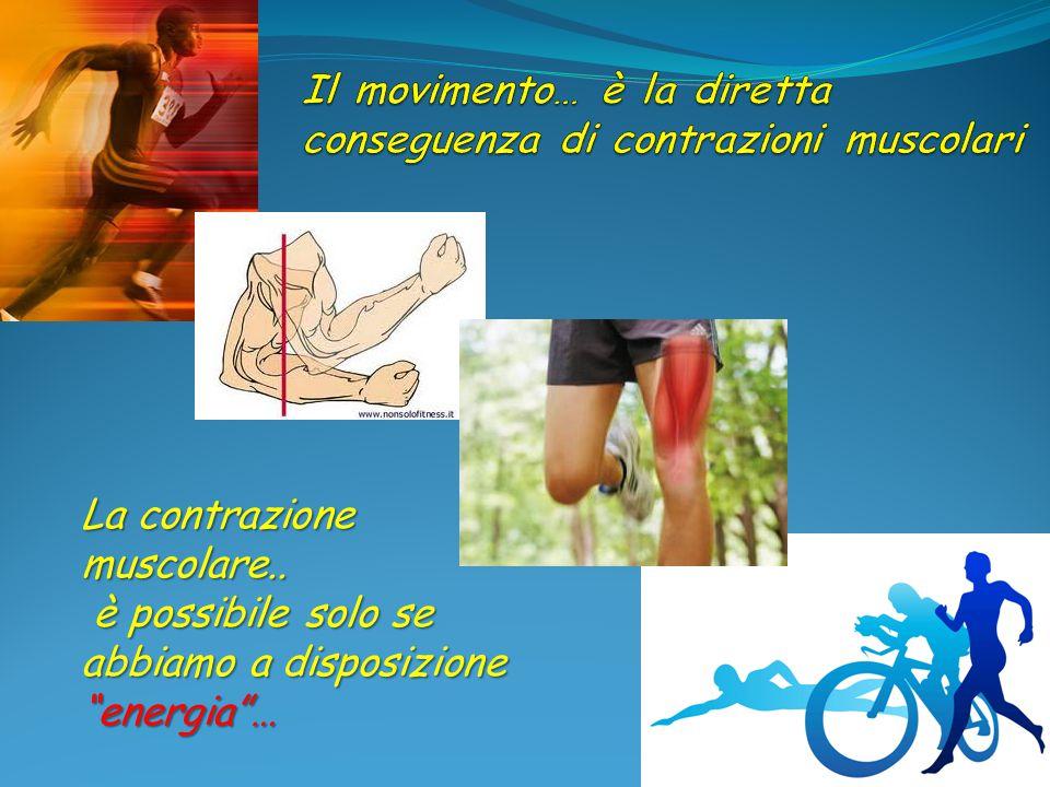 Il movimento… è la diretta conseguenza di contrazioni muscolari