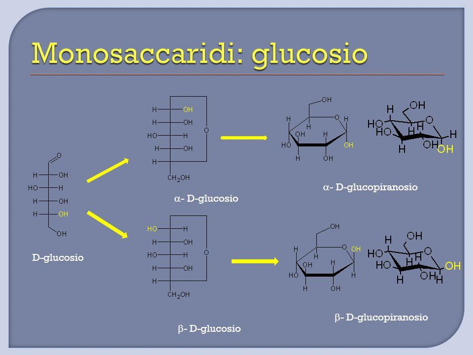 Monosaccaridi: glucosio