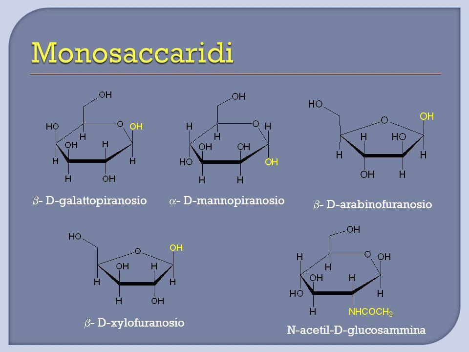 Monosaccaridi b- D-galattopiranosio a- D-mannopiranosio