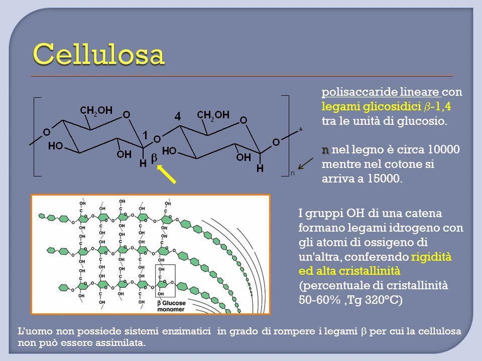 Cellulosa polisaccaride lineare con legami glicosidici b-1,4 tra le unità di glucosio.