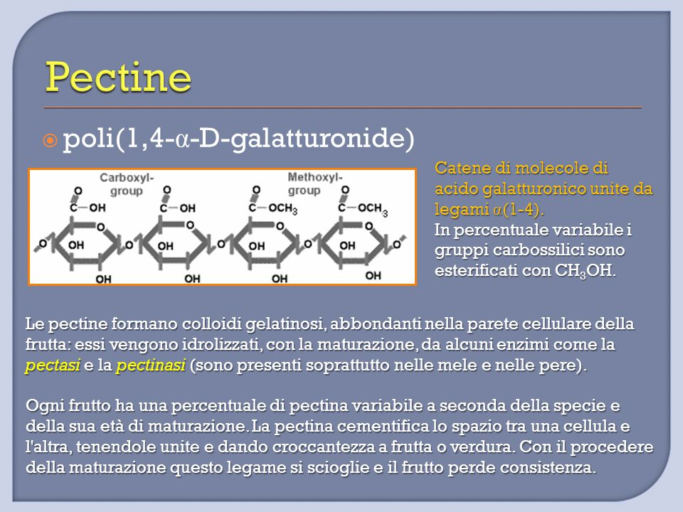 Pectine poli(1,4-α-D-galatturonide)