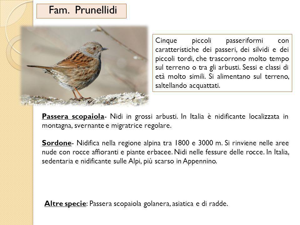 Fam. Prunellidi