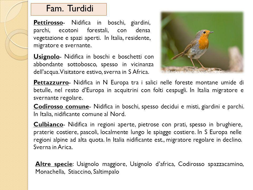 Fam. Turdidi