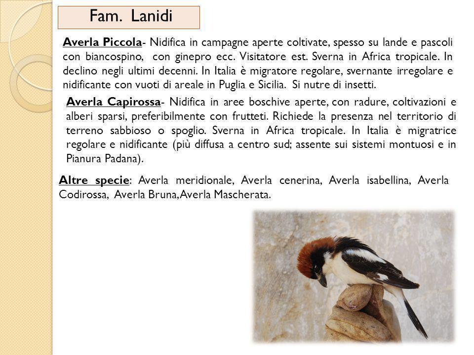 Fam. Lanidi