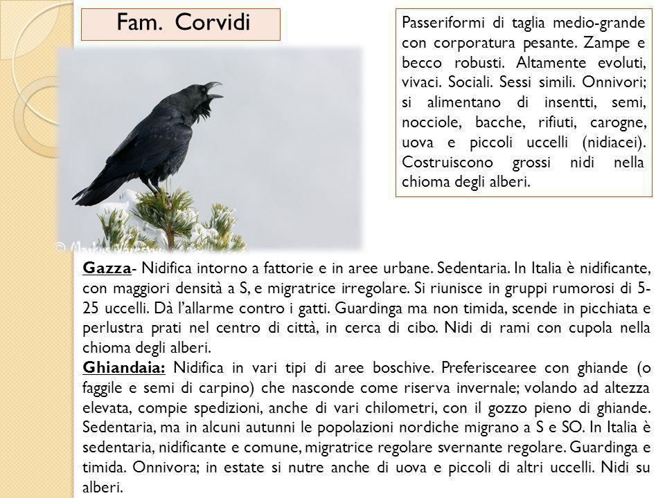 Fam. Corvidi
