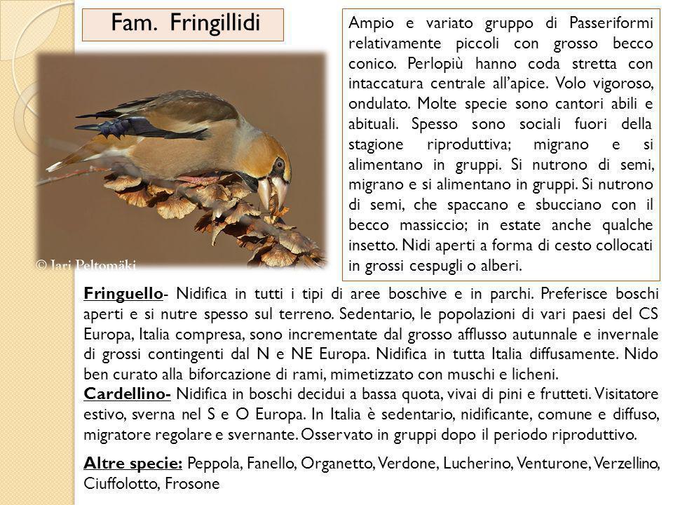 Fam. Fringillidi