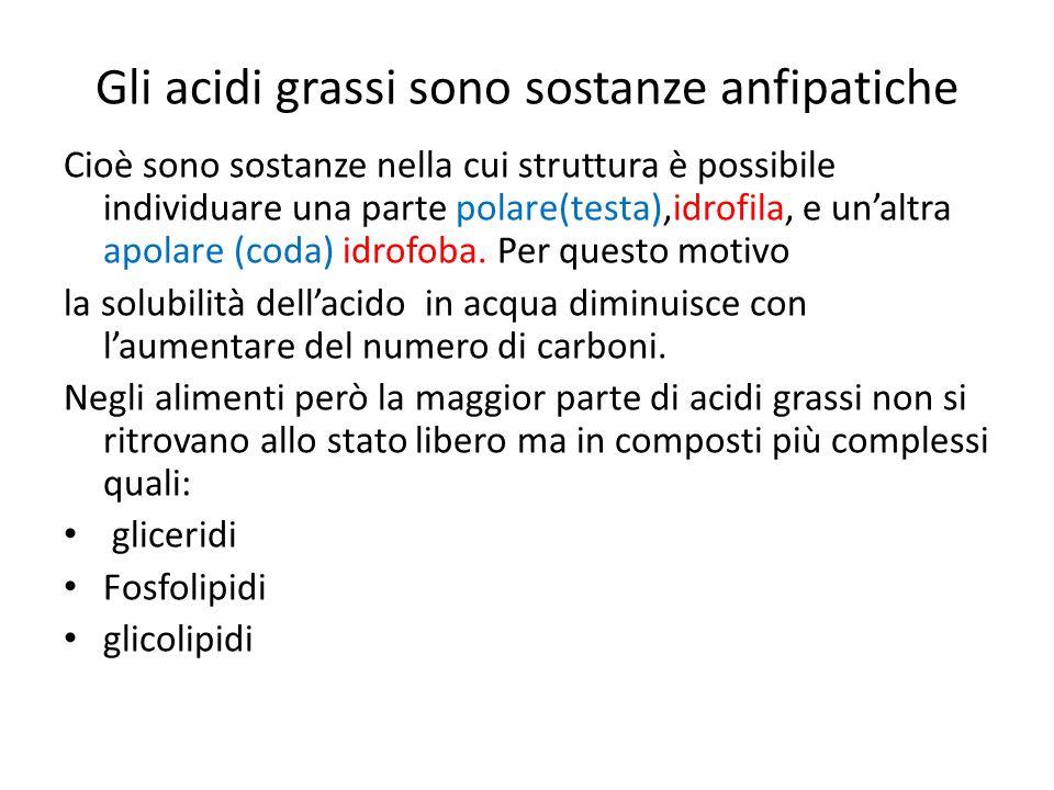 Gli acidi grassi sono sostanze anfipatiche
