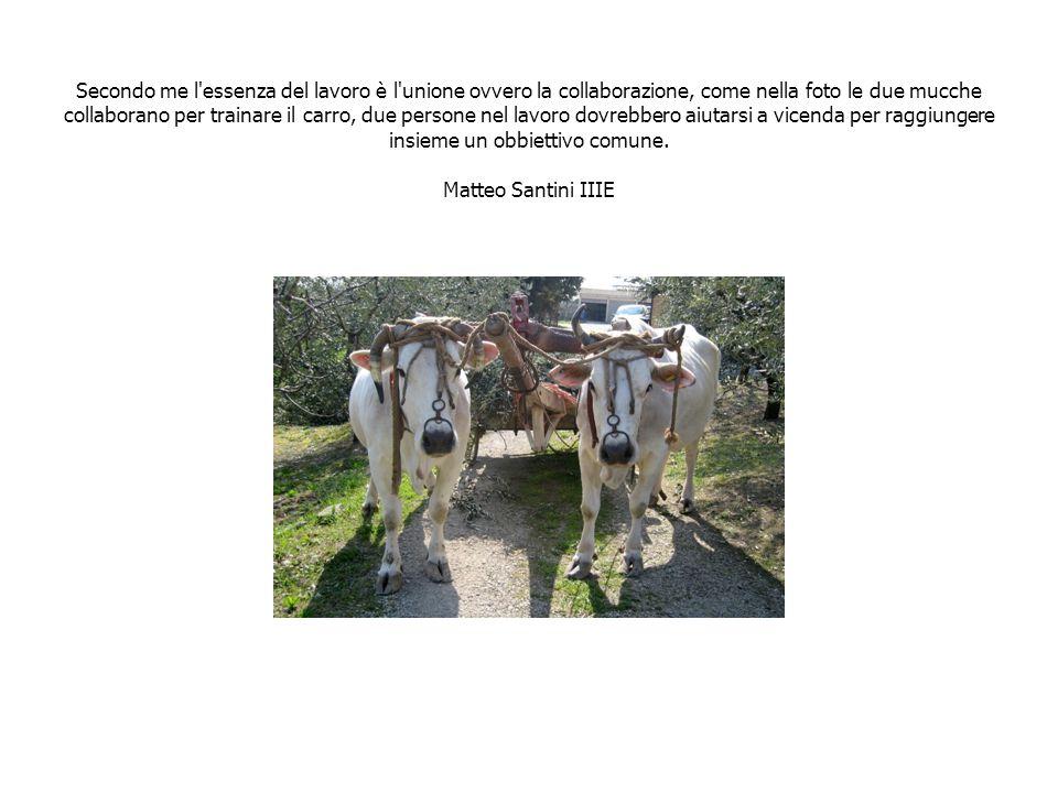 Secondo me l essenza del lavoro è l unione ovvero la collaborazione, come nella foto le due mucche collaborano per trainare il carro, due persone nel lavoro dovrebbero aiutarsi a vicenda per raggiungere insieme un obbiettivo comune.