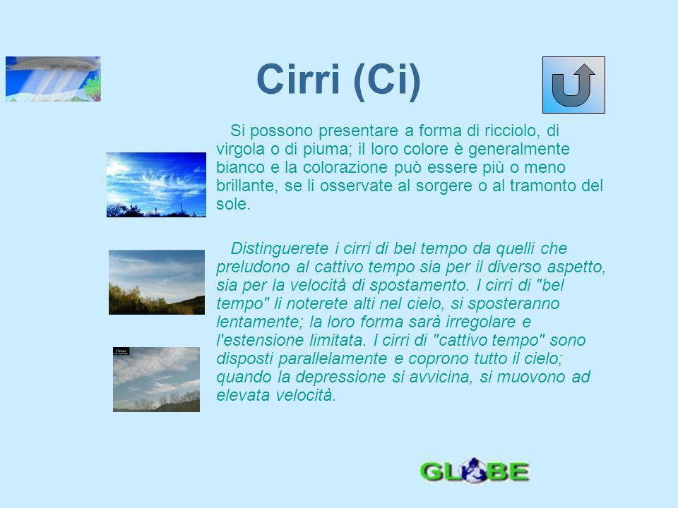 Cirri (Ci)