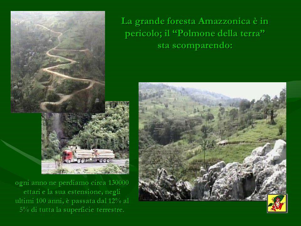 La grande foresta Amazzonica è in pericolo; il Polmone della terra sta scomparendo: