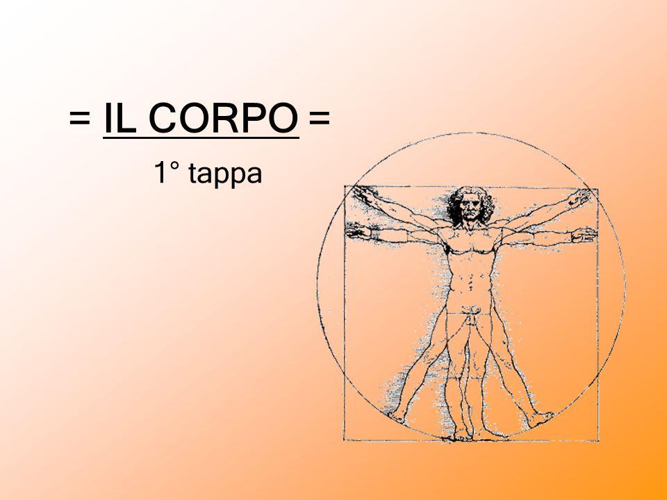 = IL CORPO = 1° tappa