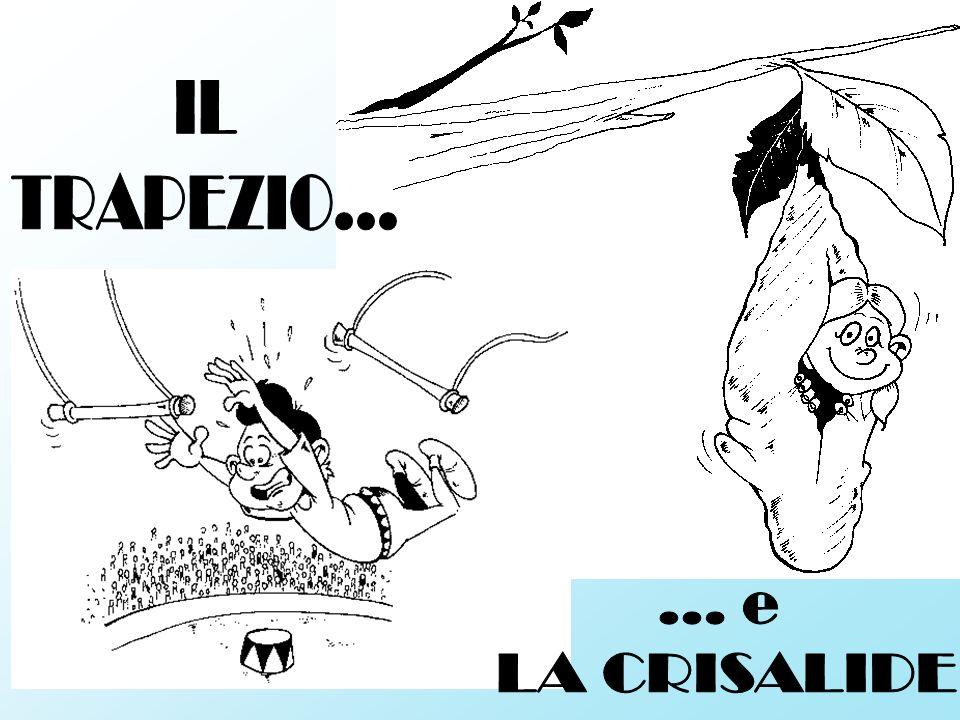 IL TRAPEZIO... ... e LA CRISALIDE