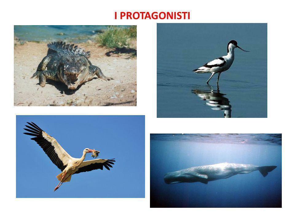 I PROTAGONISTI