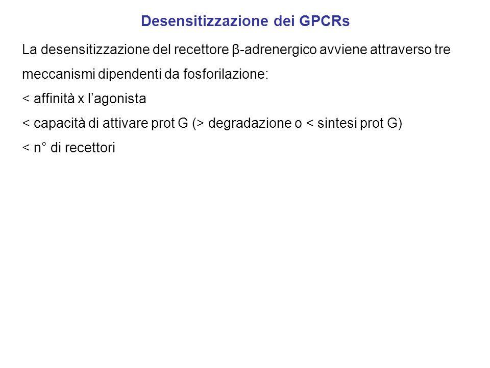 Desensitizzazione dei GPCRs