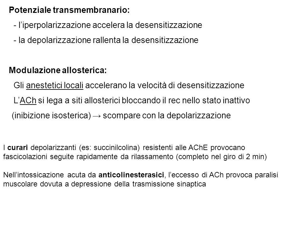 Potenziale transmembranario: